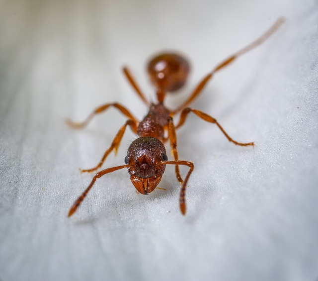 which ants are in my home