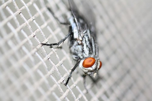 fly in a kitchen