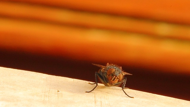 houseflies in loft