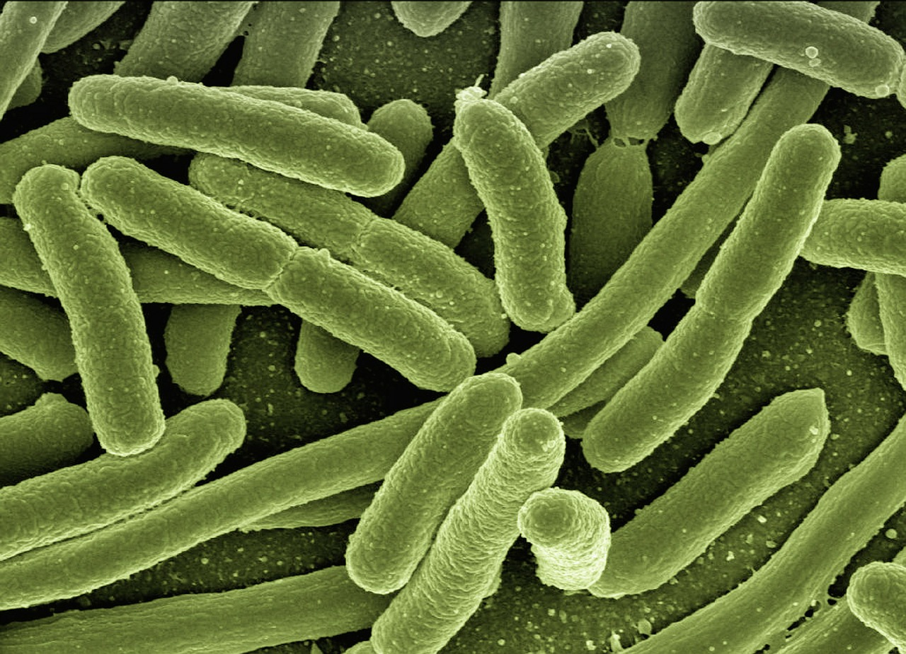 e-coli from flies