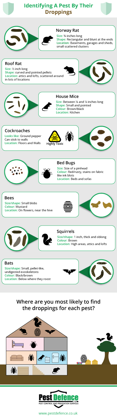 Identifying-pests-by-their-droppings