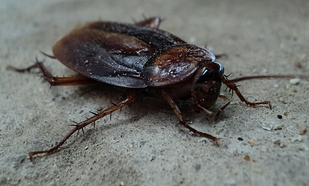 cockroaches in house I'm renting