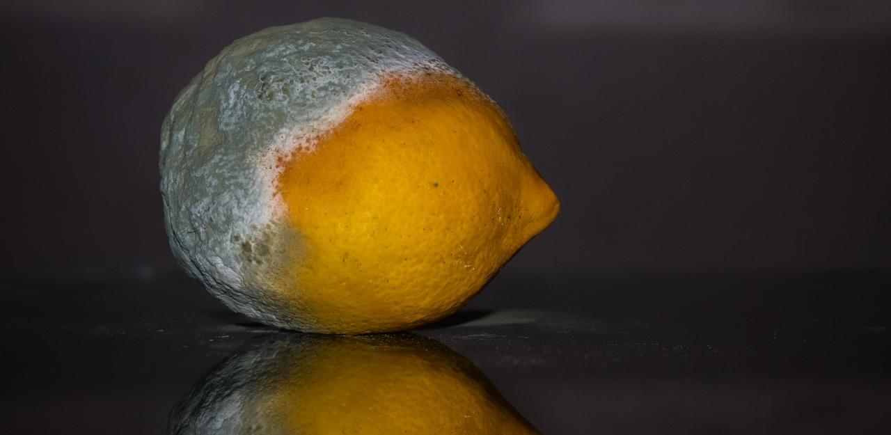 flies on lemon