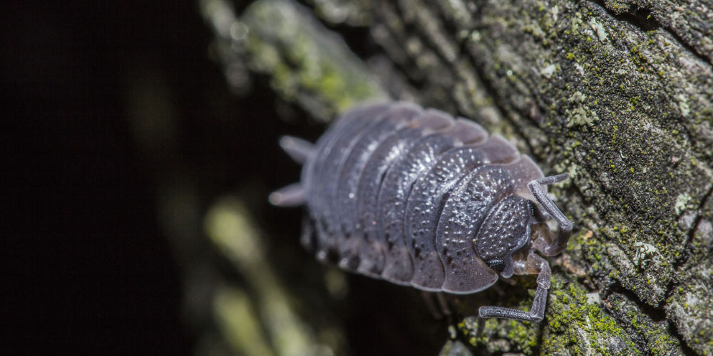 how to prevent woodlice